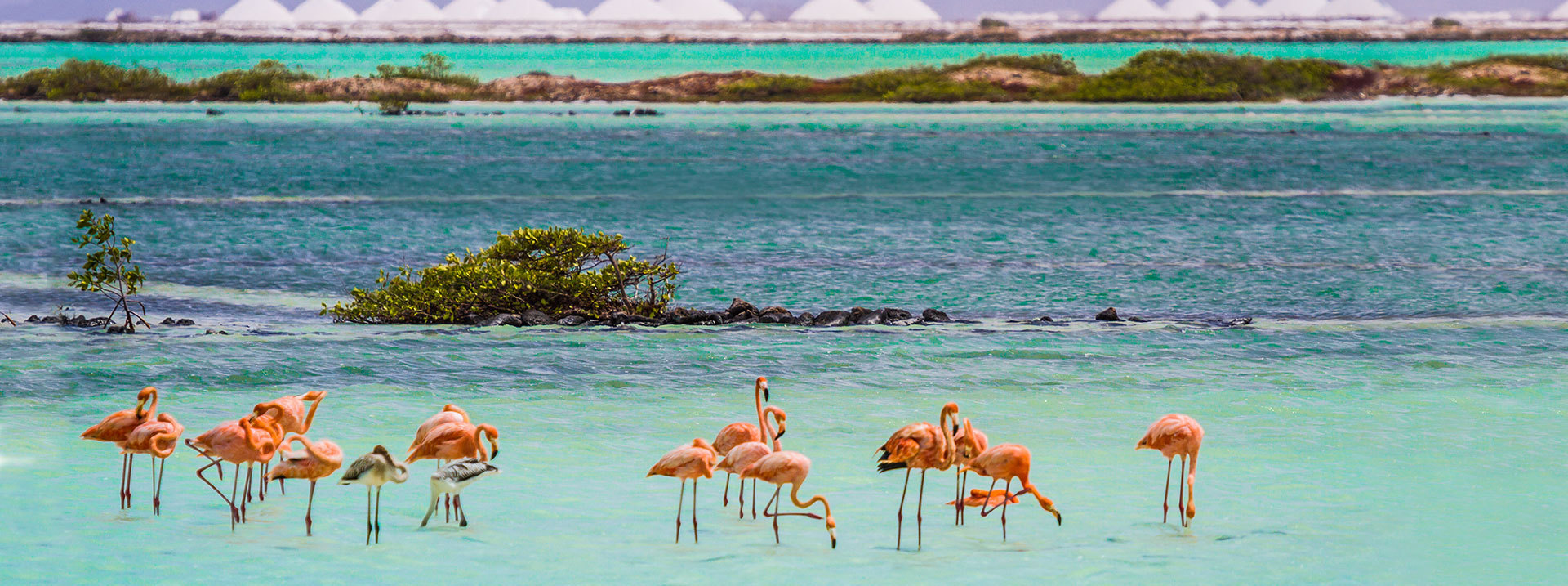 flock of flamingos standing in shallow water