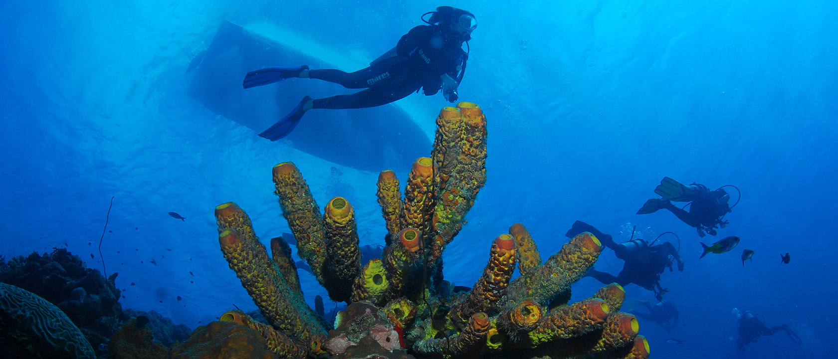 http://www.tourismbonaire.com/includes/images/diving/thumbs/Bonaire_Diving14thumb.jpg