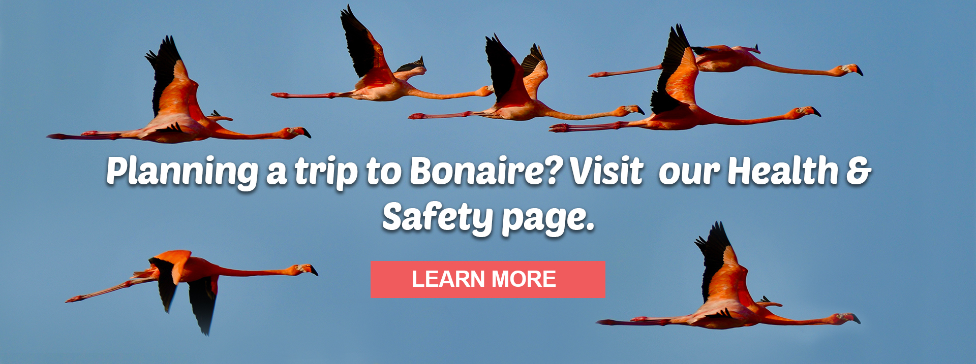 Planning a trip to Bonaire? Visit our Health & Saftey page. Learn More