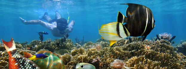 BONAIRE RANKED AS #4 WORLD'S BEST ISLAND FOR SNORKELING